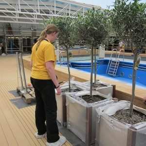 onboard florist planting plants on a newbuild ship